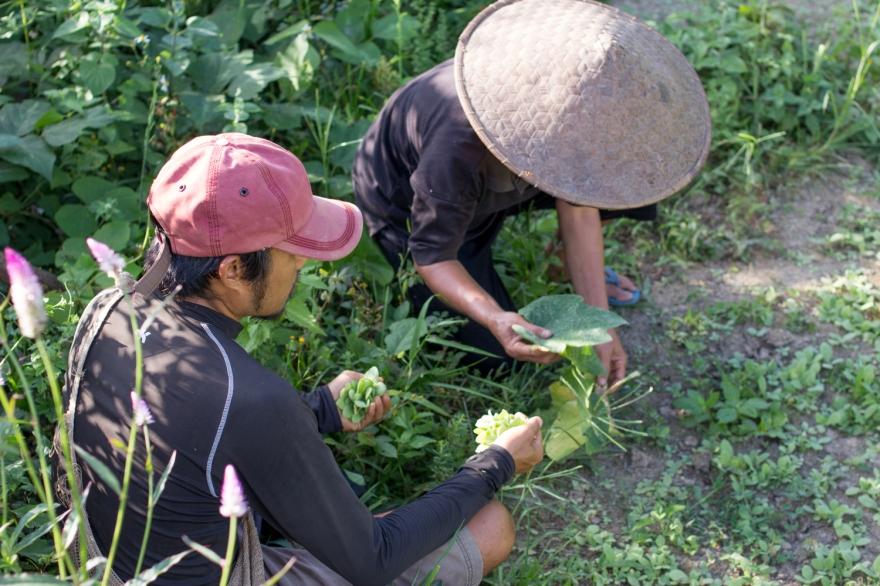 2017-11-LAOS-Yensabai farm-Xay (39)