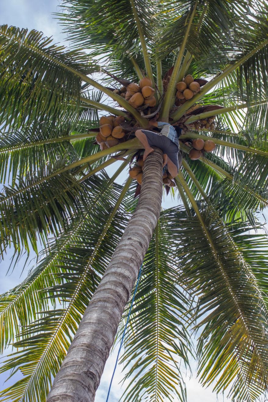 03-2018-02-INDONESIE-SULAWESI-Chez Tono à Tombula (40)
